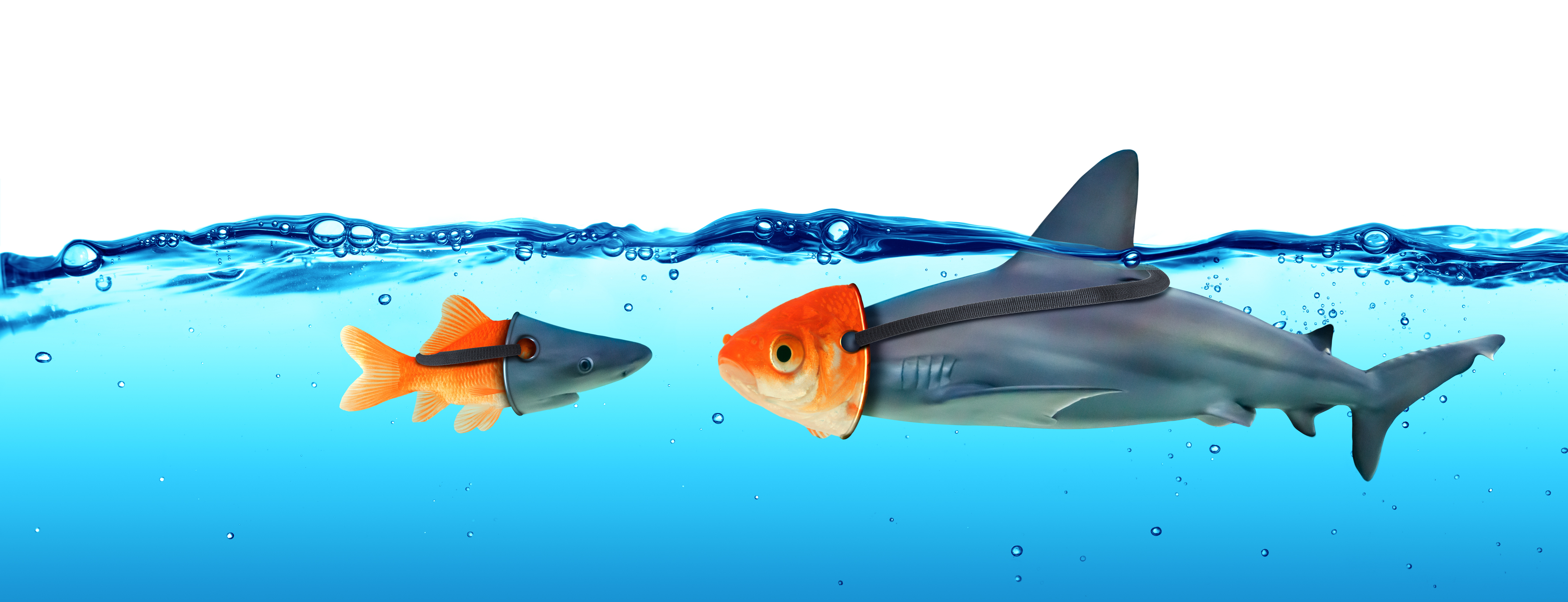 Deception Concept – Disguise Between Shark And Goldfish